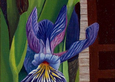 Iris in Bunyan's Cove