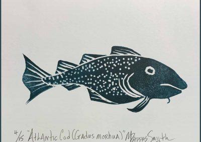 Atlantic Cod (Gadusmorhua)